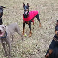 FRIENDS OF MAIZE MEMORIAL DOG PARK