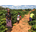 Ndola Mission Trip (June 2016)