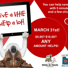 WAG-N-TRAIN DOG RESCUE & TRAINING