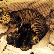 Mother's Day Rescue Story:  Mama Cat Darrie