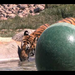 Lions Tigers & Bears Video