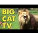 Lucas Gordon Birthday Big Cat Fund