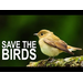 Pradeep & Agastya's Pop-Up Habitat for Birds Fund
